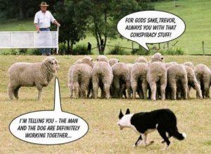 MK lambs_0